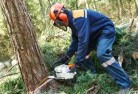 Ambrose Tree felling services 21