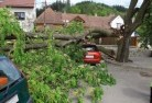 Ambrose Tree felling services 41