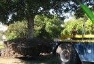 Ambrose Tree felling services 4